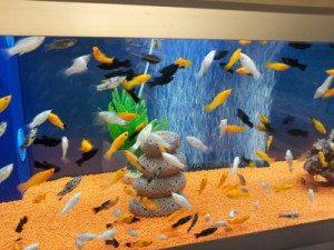 Ein Aquarium richtig reinigen und pflegen