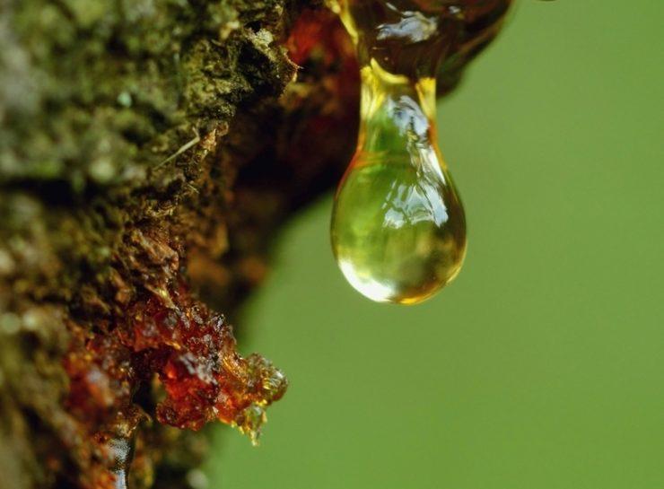 Harz und Harzflecken entfernen