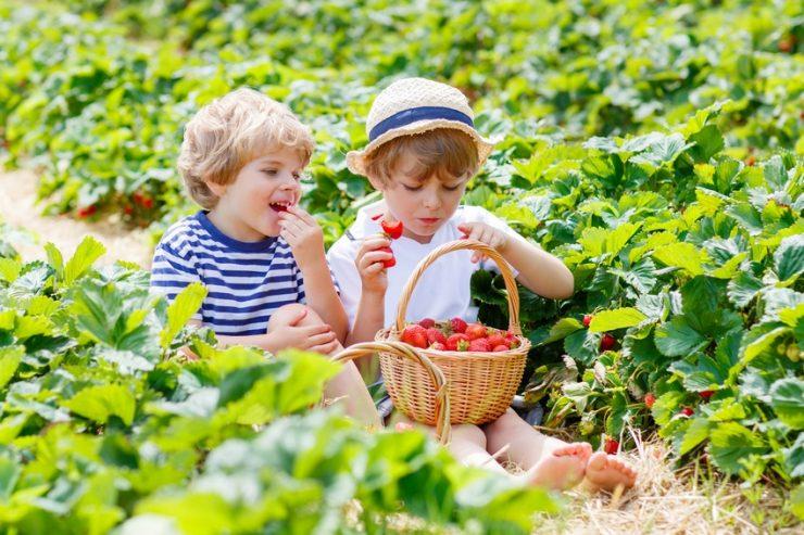Erdbeerflecken entfernen